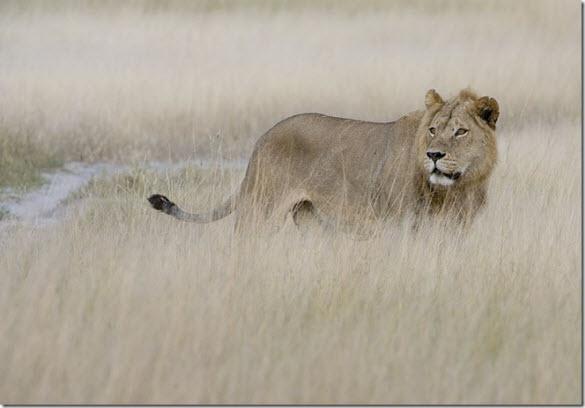 beautiful wildlife photography