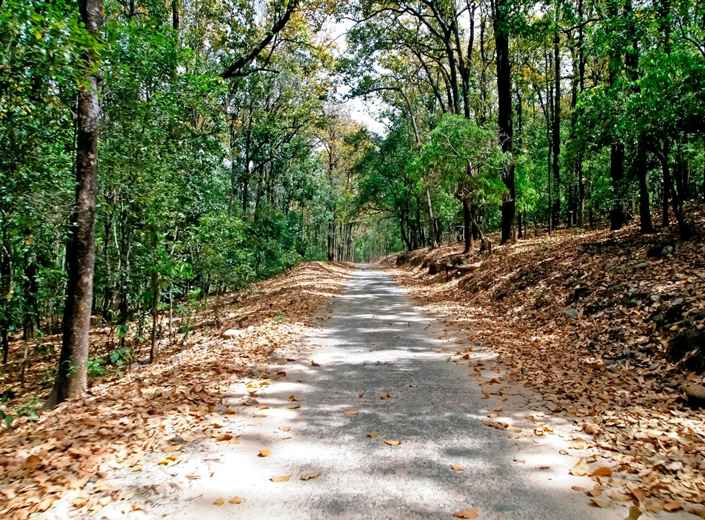 Jungle trail: Jim Corbett National