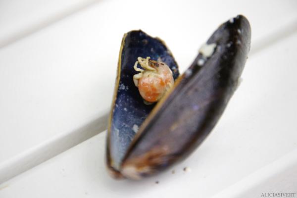 aliciasivert, alicia sivertsson, Le Nebourg, market day, shellfish, mussel, clam, crab, krabba, mussla, skaldjur