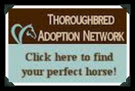 save a horse click on the pic! 