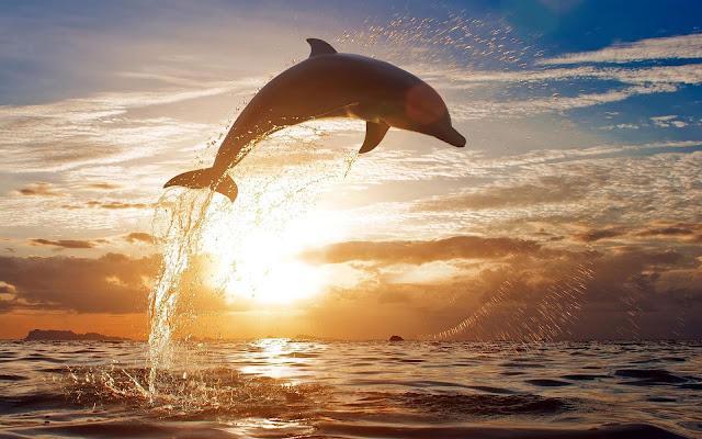 Wallpaper springende dolfijn