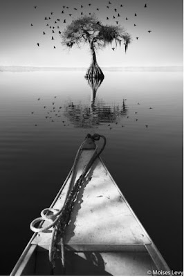Green Pear Diaries, Moises Levy, fotografía, fine art photography