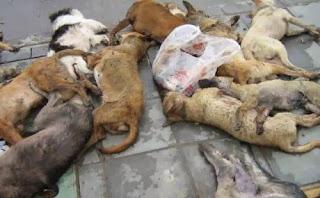 dead-dogs.jpg