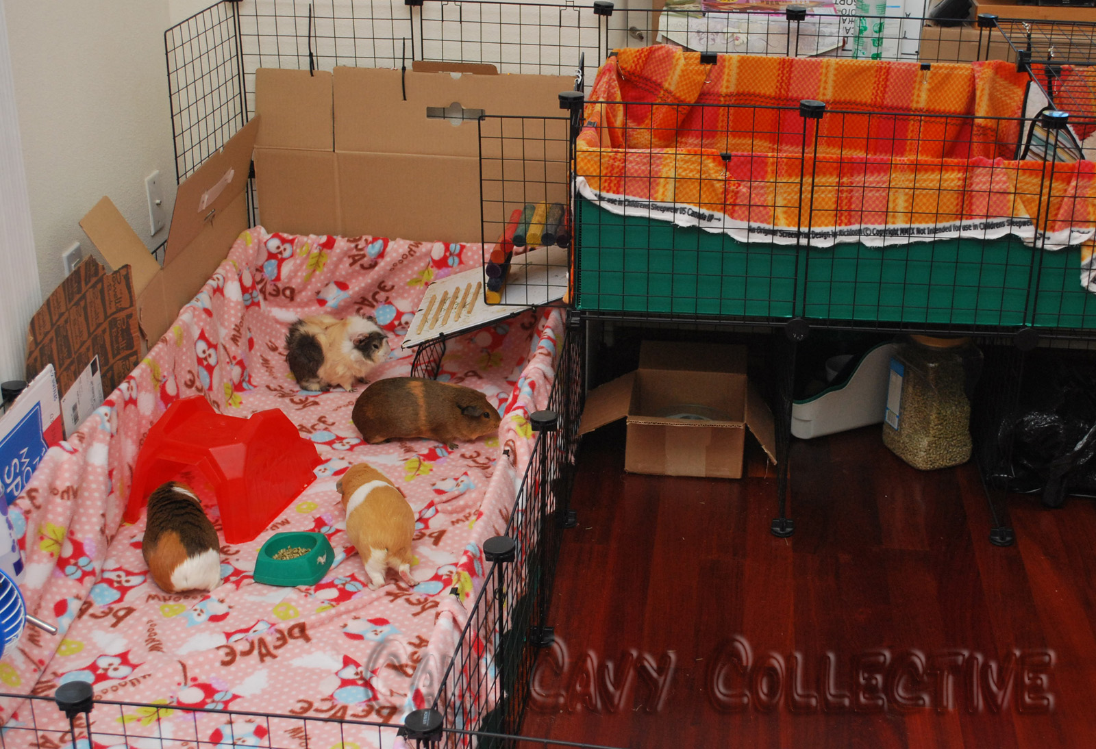 Cali cavy collective a blog about all things guinea pig for Guinea pig cages for two
