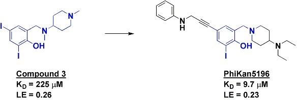 Small peptides and p53: what does this mean? can you help me put this into simpler terms?