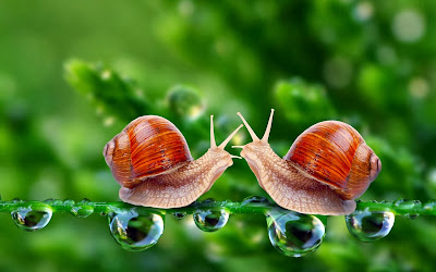 Snail HD computer wallpaper