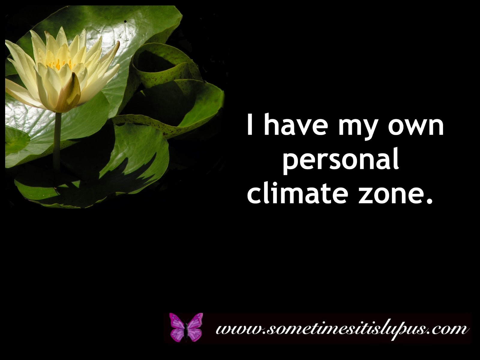 "Image: Yellow water lily on black background. White text: ""I have my own personal climate zone."""