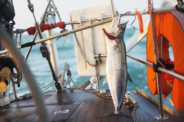spanish mackerel colombia fishing sailing