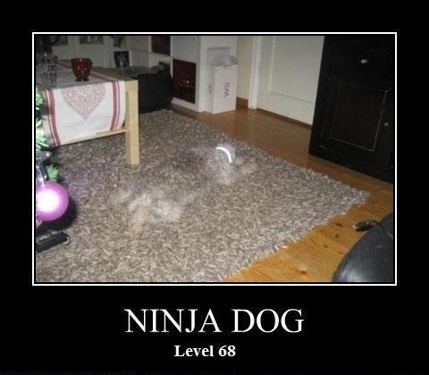 Ninja Dog Level 68