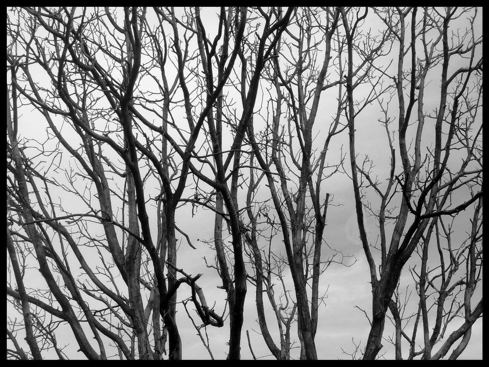 Cadalso vive las ramas de un rbol - Ramas de arboles ...
