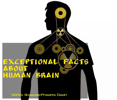 Exceptional Facts About Human Brain