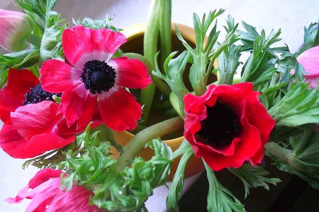 frauschoenert's flowers