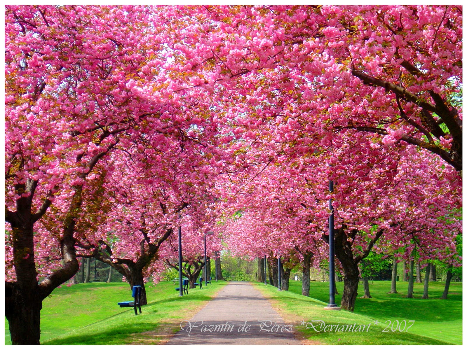 Gambar : musim semi