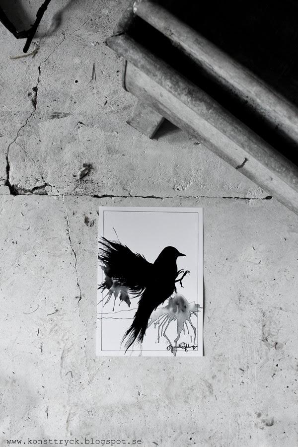svart fågel, svartvit, svartvita, tavlor, tavla, artprint, artprints, konsttryck, poster, illustration,