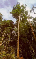 The Best Blog Ever travel the World RTW -family Travel with kids Brazilian Coa Tree in Brazil