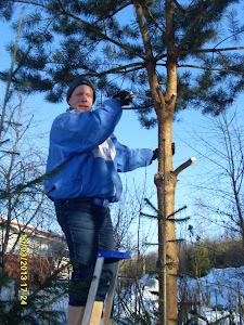 Puutarhapalvelu Tampere Olavi Lehto tuo valoa pihaanne harventaen, raivaten ja karsien