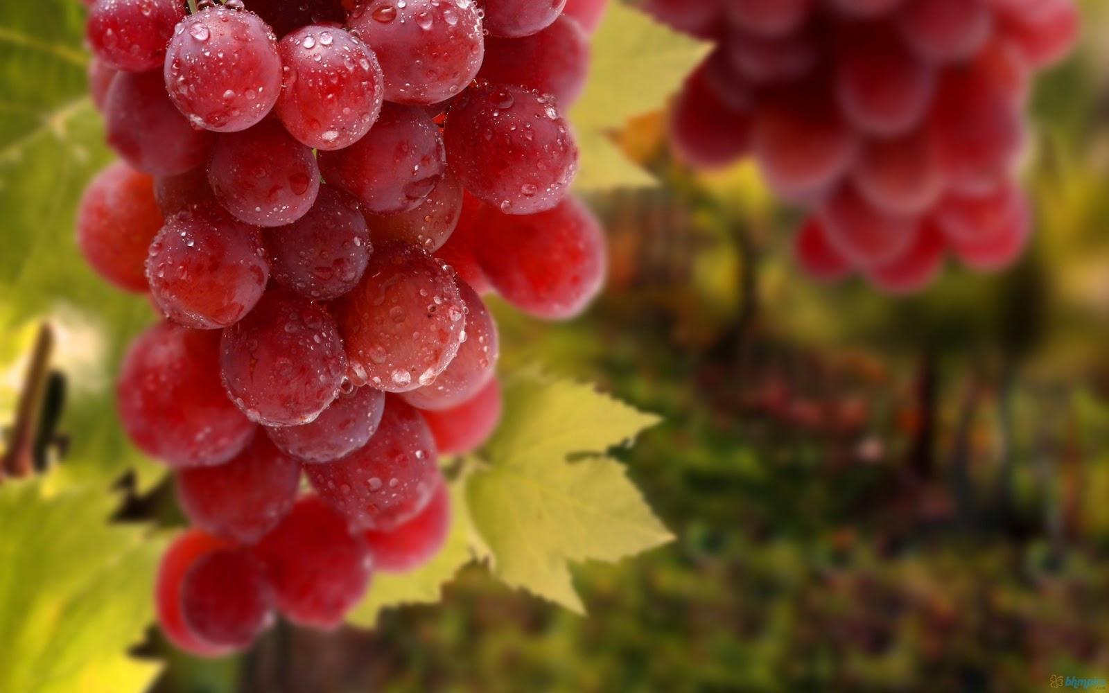 http://4.bp.blogspot.com/-yFh48PP1gjM/URPL-qlqNuI/AAAAAAAAAMc/TH6z1-UPtGQ/s1600/red_grapes_1920x1200.jpg