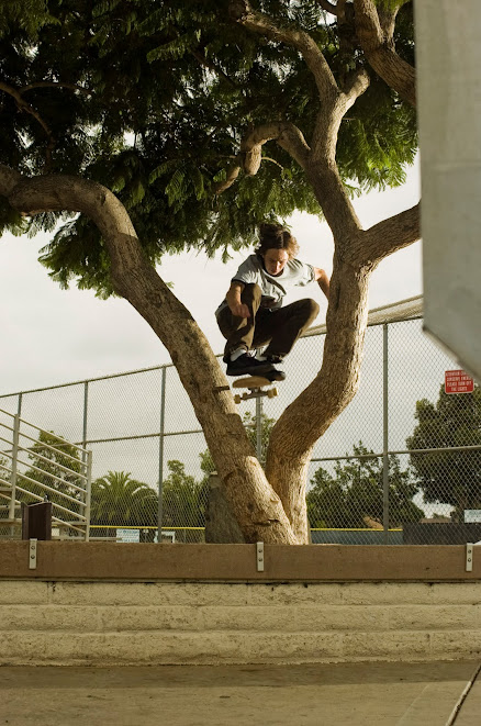 Riley Hawk Ollie thru the tree