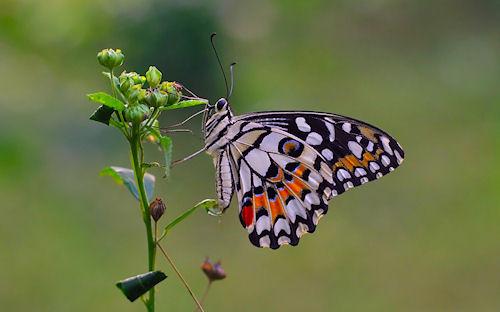 Mariposa - Butterfly by Anton Wahyudi