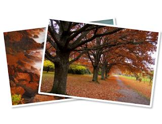 Sử dụng CSS Keyframes hoán đổi hình ảnh