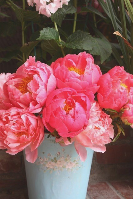 When I First Cut Or Buy Peonies I Put Them In My Sap Bucket With Ice Cold  Water And Let Them Rest Outside For A Little While.