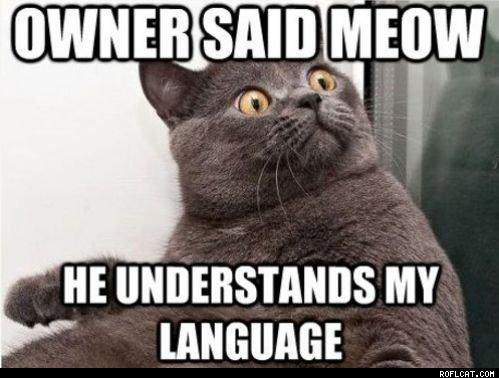Funny Cat Lady Memes