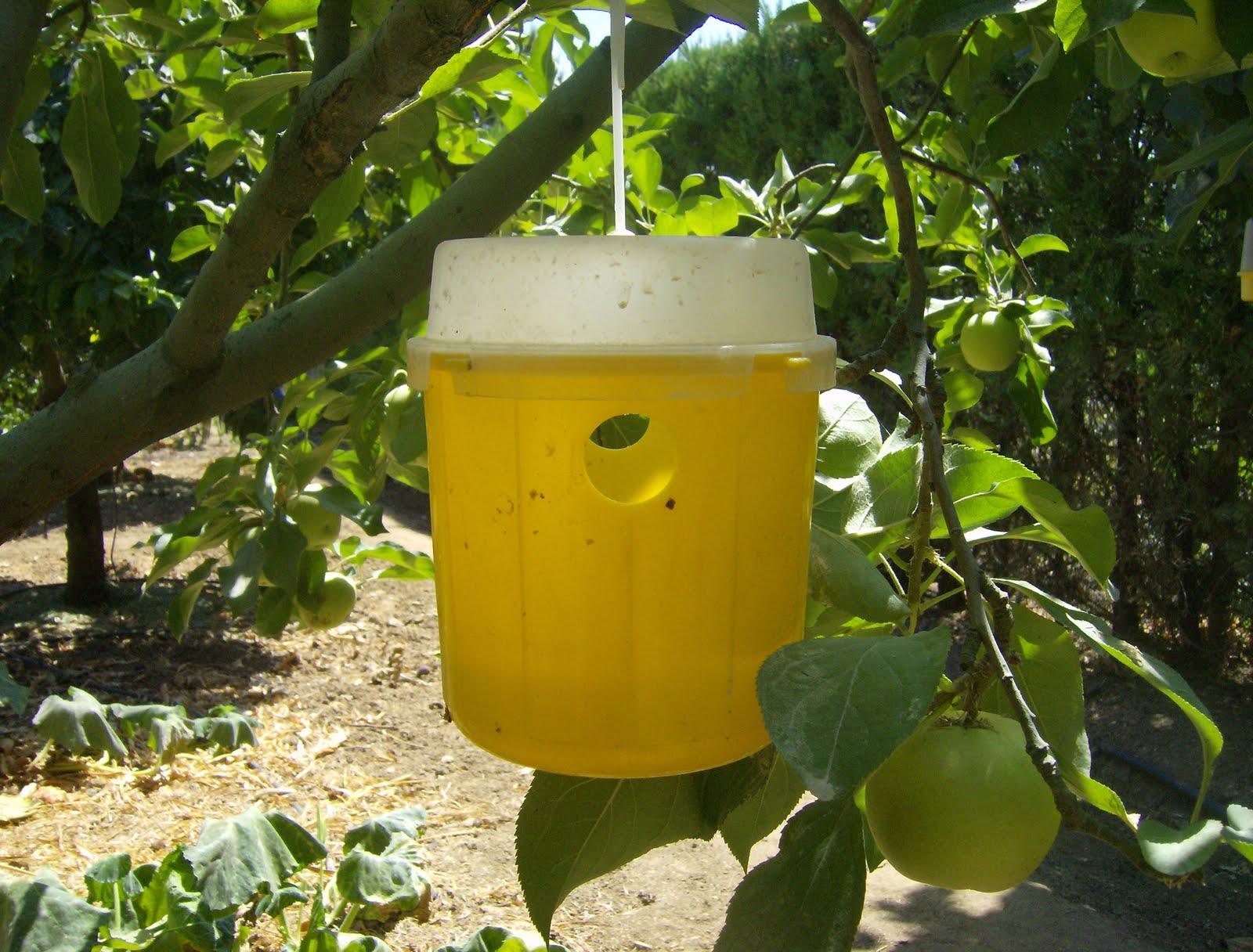 Tiras amarillas para moscas de la fruta