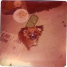 In Loving Memory Of Benji 11/76 To 6/94