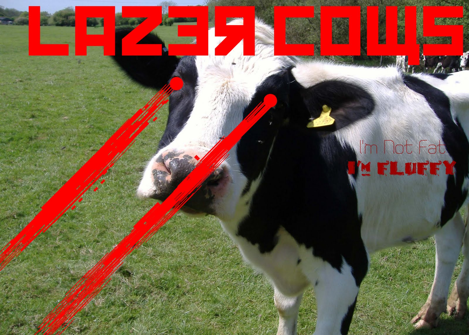 Team Laser Cows