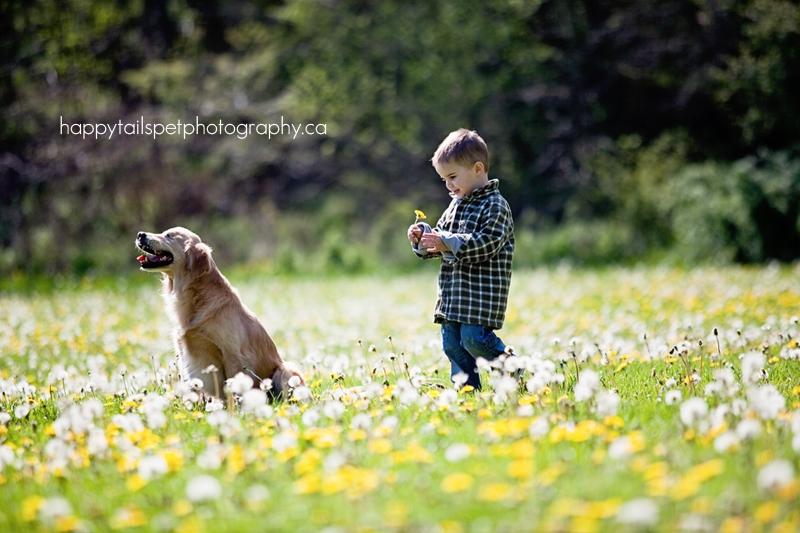 Blind golden retriever dog and boy.