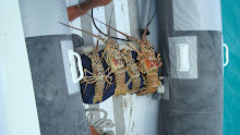 Lobster anyone???