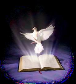 Sagrada Biblia. Nuevo Testamento.