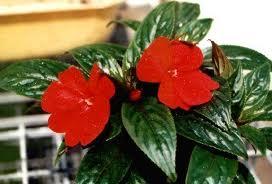Jakie kwiaty do kuchni, rośliny w kuchni, kwiaty w domu, rośliny w pomieszczeniach, dekorowanie wnętrz