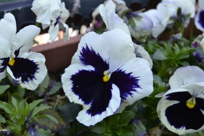 fiori a primavera