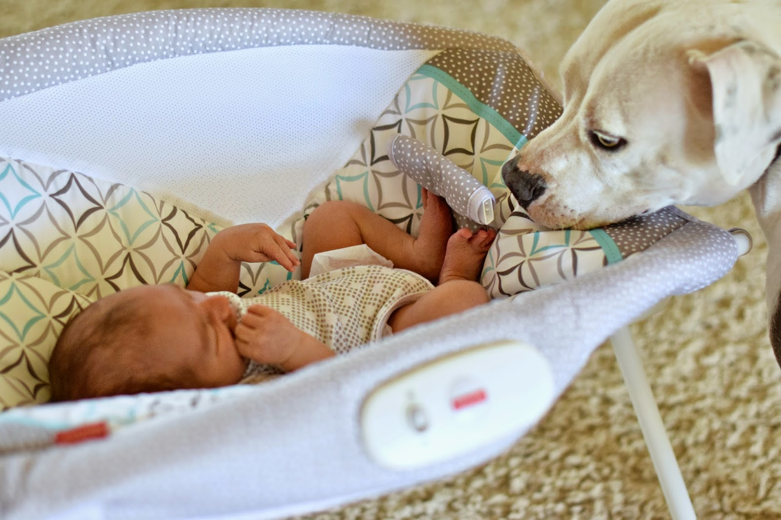 5 Tips for introducing your dog to a new baby, #Furreal, I and Love and You