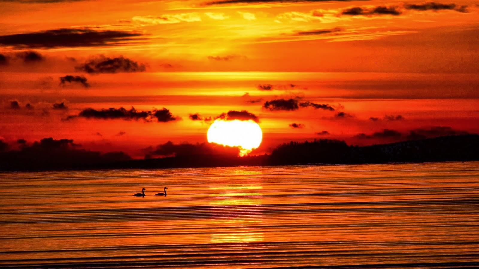 Simple   Wallpaper Horse Sunrise - Sunset+12  You Should Have_644976.jpg