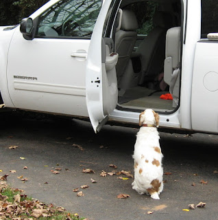 Bird dog waiting outside truck
