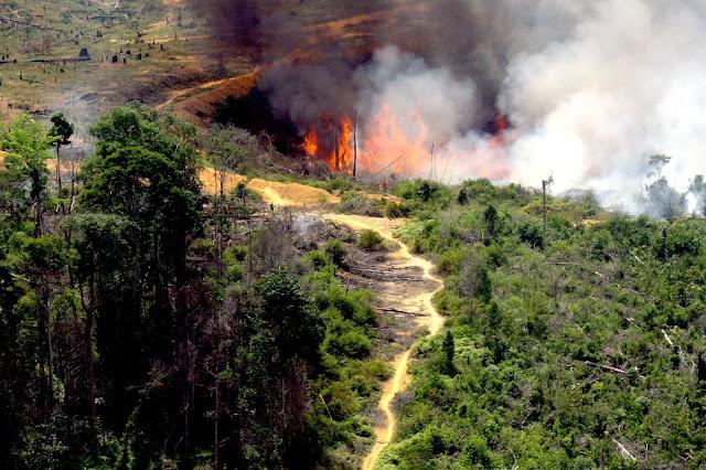 Aktivis Lingkungan desak PT Bumi Mekar Hijau diberi hukuman berat