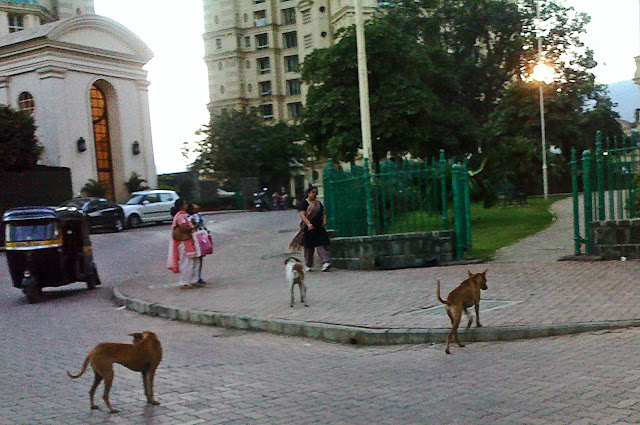 stray dogs on the road
