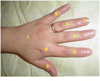 Parts of body feature of hand
