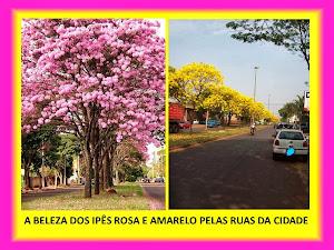 PELAS RUAS DE DOURADOS/MS