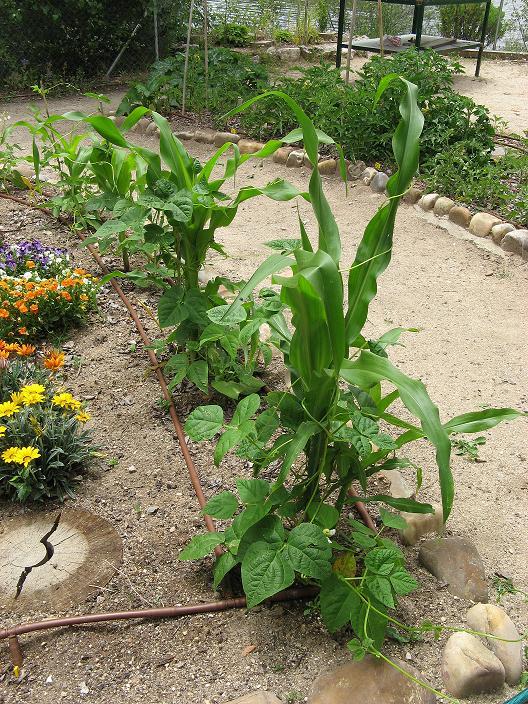 Ecologicos de segovia curso dise o de huertos Rotaciones de cultivos ecologicos