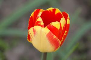 Frühling Diashow