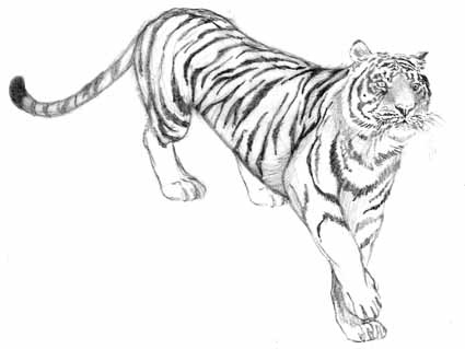 tattuart s tattoo desenho de felinos e outro animais para tatuagem