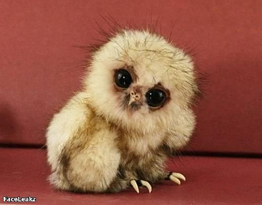21 Foto Yang Harus Anda Lihat Setelah 21 Mei 2011 Berlalu - Foto bayi burung hantu