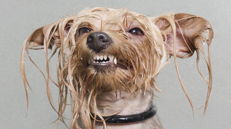 Perro Mojado: Extravagantes retratos de perros capturados en medio baño por Sophie Gamand