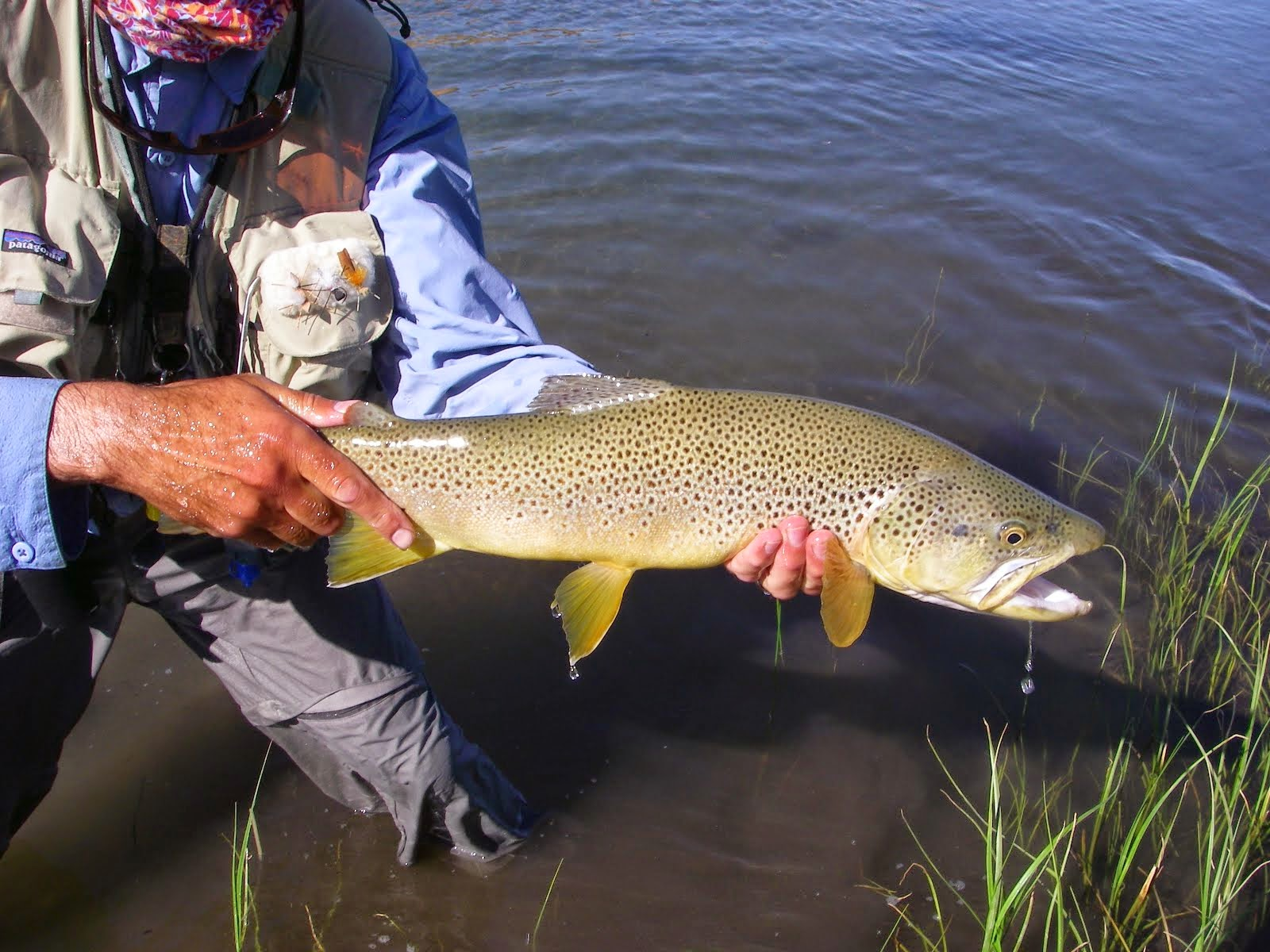 Awesome Brown Trout