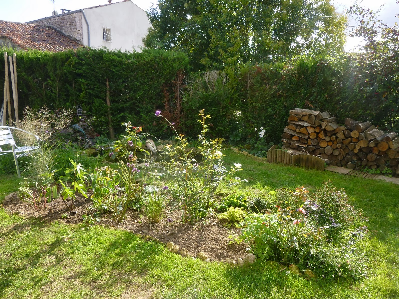 Cagouille 39 s garden un arbre au jardin for Jardin taille olivier