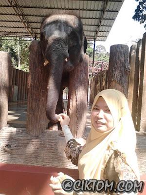 cik tom bagi gajah makan tebu