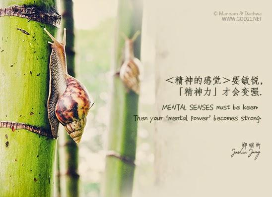 郑明析,摄理教会,月明洞,蜗牛,竹子,精神,Joshua Jung, Providence, Wolmyeung Dong, snail, bamboo, mental